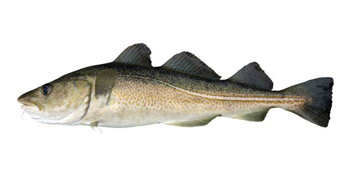 oline kala rasva kaotus kui palju kaalulangus vahelduva paastumise kaudu