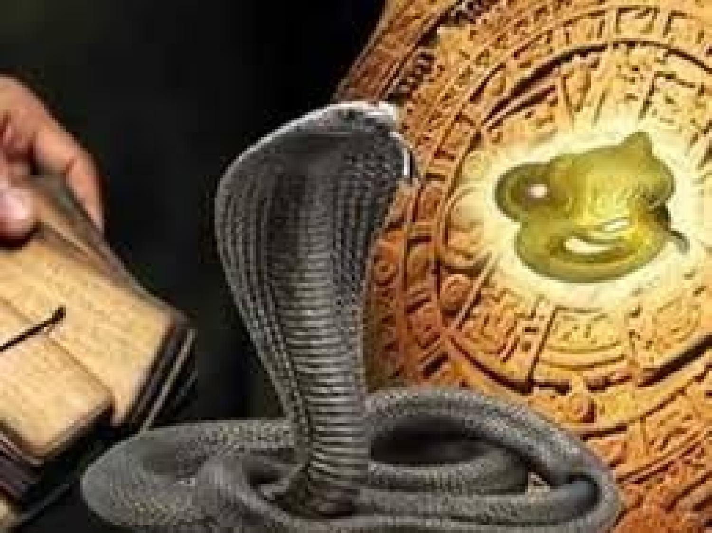 king cobra kaalulangus terved30 paev 15 kaalulangus pole