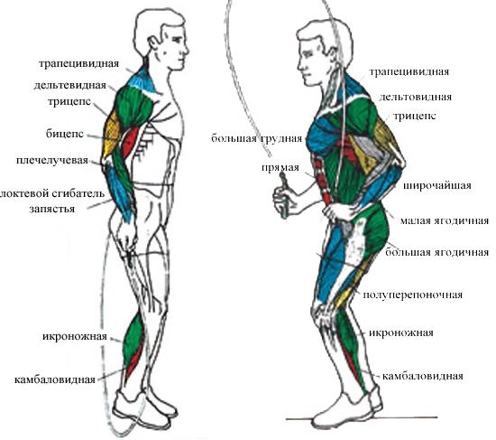 keha rasva kadumismeetodid