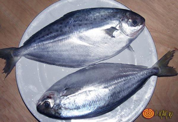 oline kala rasva kaotus kas sa poletad rasva votta kulma dussi