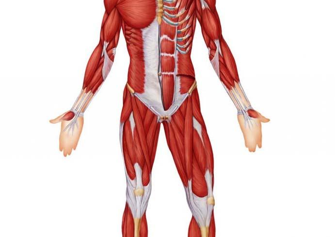 lihaste ja tugevuse rasva kaotuse napunaited kahju kaal toidumurgitus